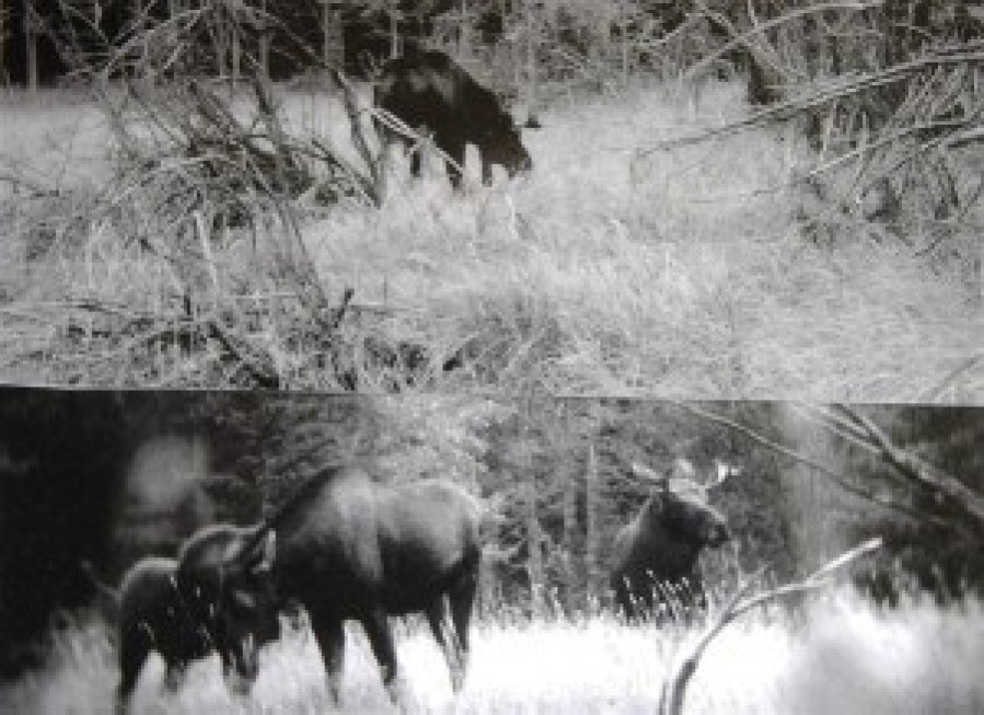 Fred Stewardson (78), of Hikurangi, in Northland, took the photographs on a hunting trip to Wet Jacket Arm in 1953