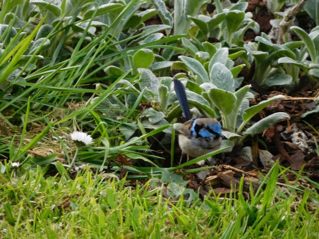 Birds in our garden: