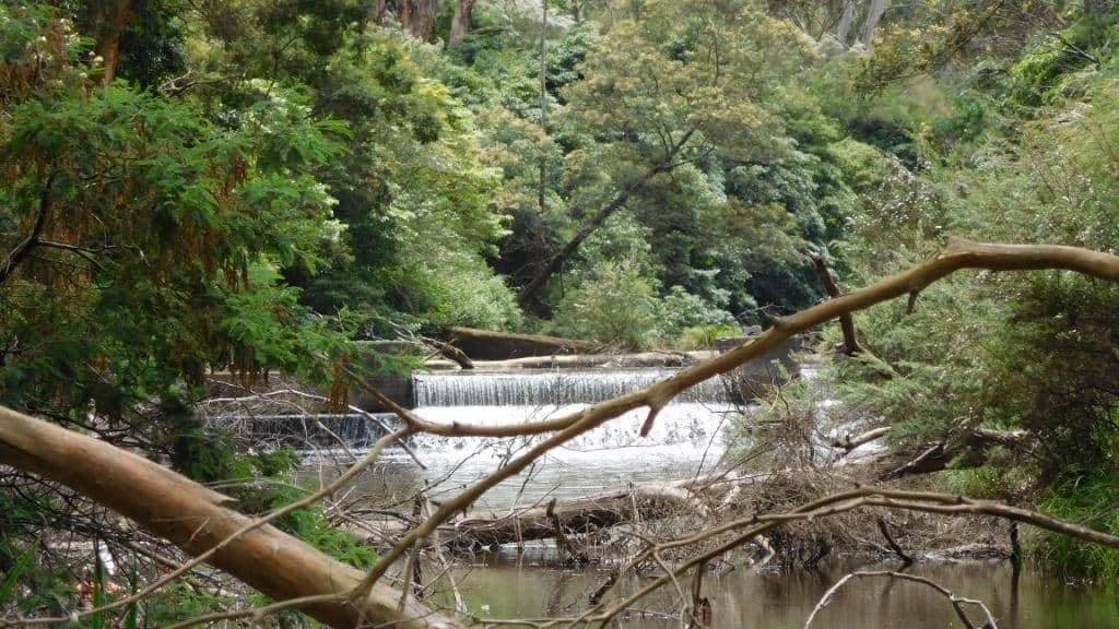 Upper Yarra Track: Section Two: Yallourn North to Wirilda Park