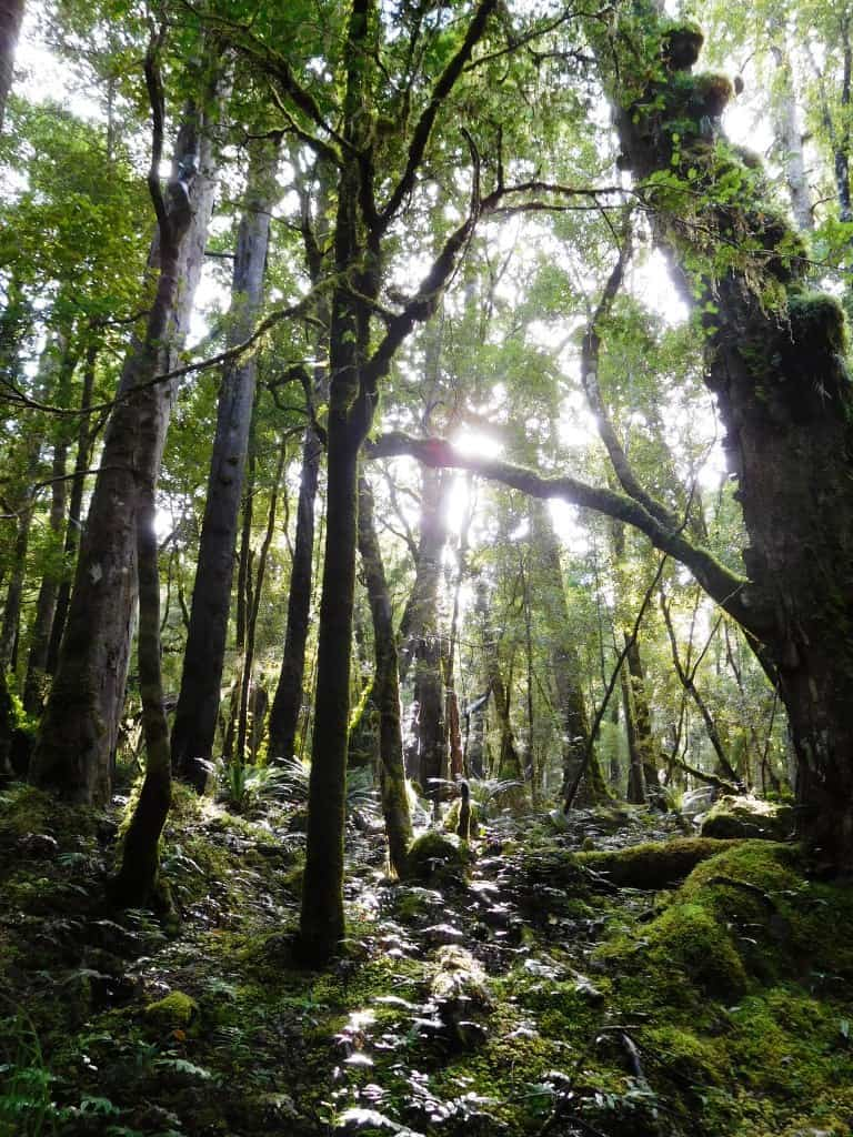 South Coast Track Fiordland NZ Wairaurahiri to Waitutu 2016: