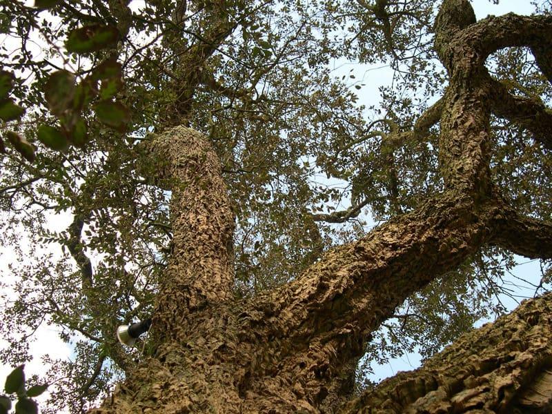 'Great Oaks From Tiny Acorns Grow':