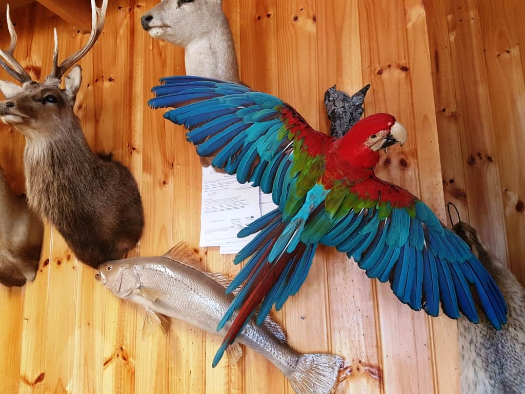 Hein's Taxidermy: