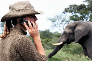 cell-phone-elephant