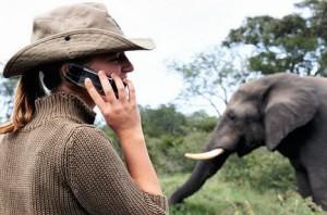 cell-phone-elephant