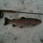 A fine 3lb Rainbow from a snowy Wellsfield