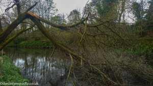 A broken tree