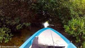 Gaps in the jungle