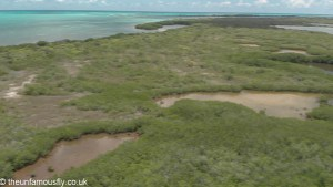 The mangrove area