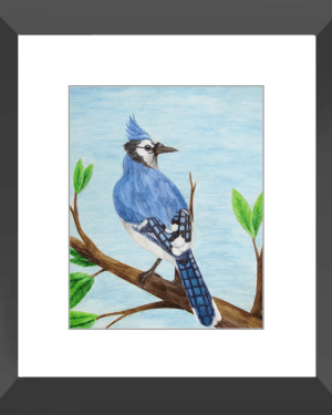 Blue Jay Framed Print of Watercolor Pencil Avian Totem Animal Fine Art