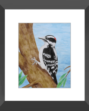 Downy Woodpecker Framed Print of Watercolor Pencil Avian Totem Animal Fine Art