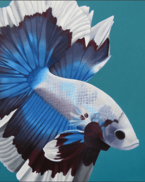 Betta Fish – Giclee Print of Siamese Fighting Fish Acrylic Paint Fine Art