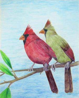 Cardinal Couple Poster of Watercolor Pencil Avian Totem Animal Fine Art
