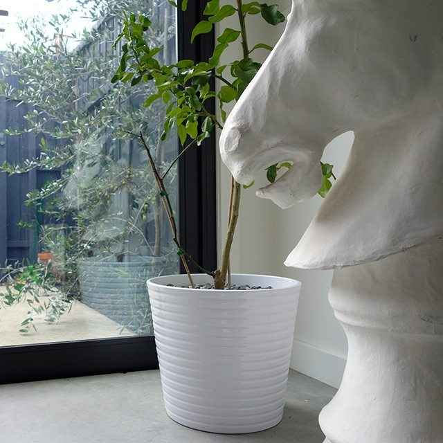 stylish way to kitten proof your plants