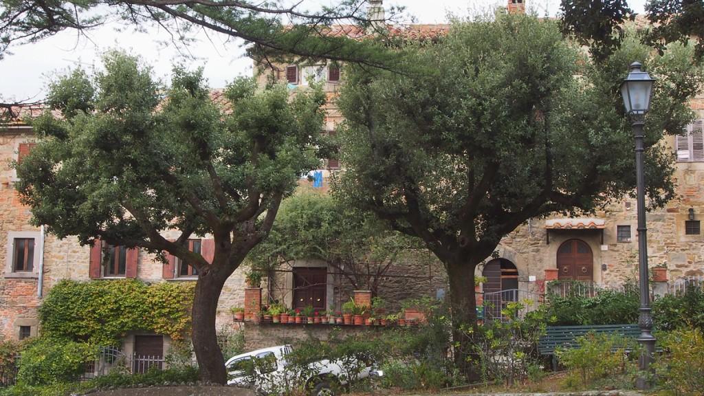 Cortona A peaceful square, surrounded by beautiful trees Quercus Ilex. (Holm Oaks)