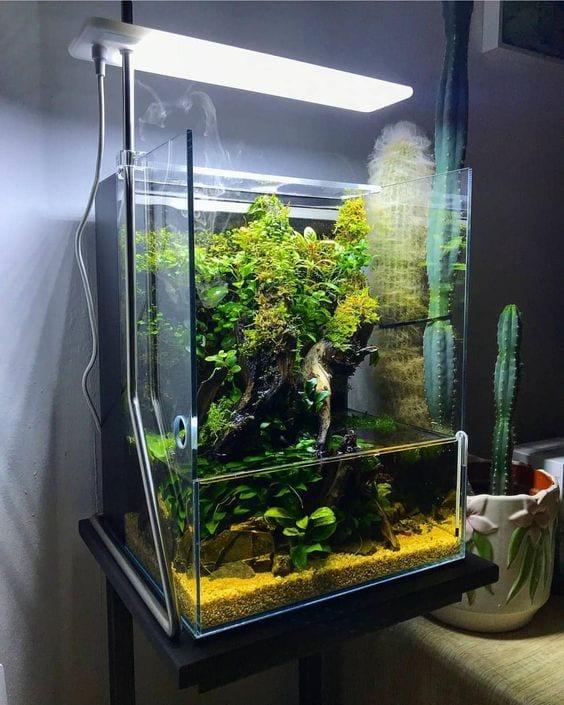 Best Modern Home Aquarium Ideas