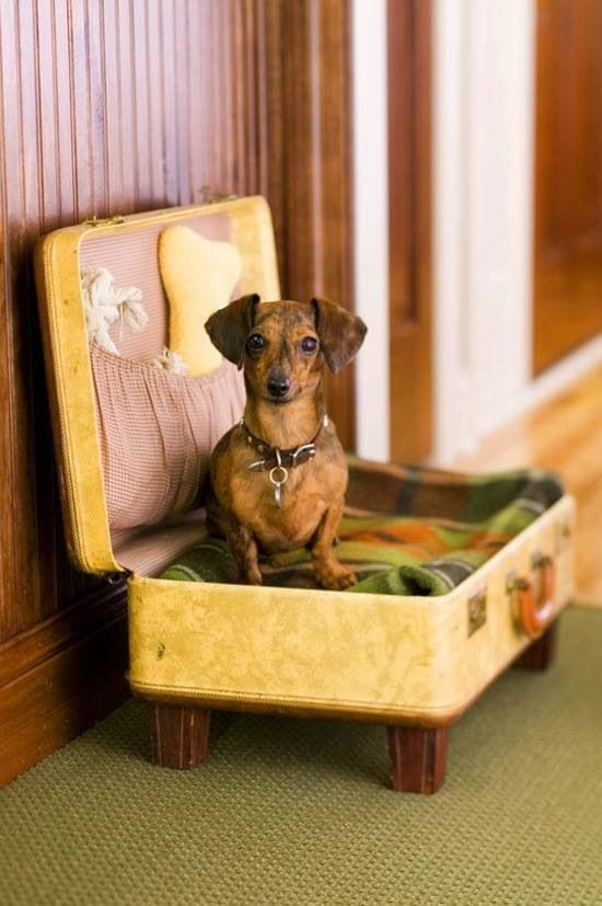 Cute Pet Bed Ideas for your Dog
