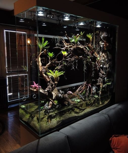 Unique Fish Tank Ideas for You