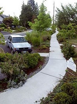 At-grade sidewalk protected behind bioswale, angle parking, and landscaping. (City of Seattle)