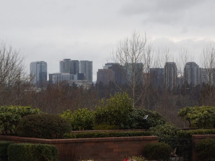 A row of skyscrapers behind a row of trees at a Bellevue park.
