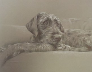 Pet portrait drawing in pencil and pastel pencils of a dog by Annabelle Valentine