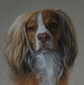 Pet portrait of a dog in Pastels by Annabelle Valentine