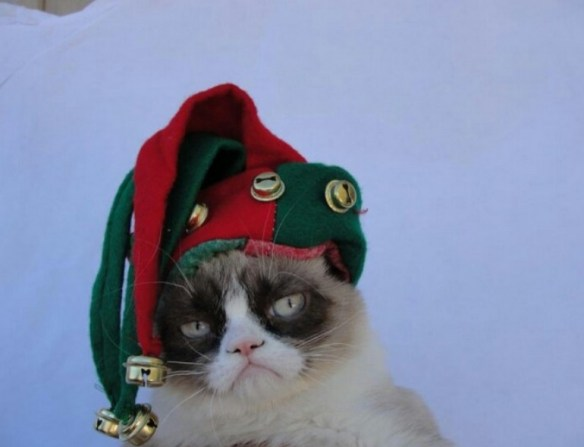 Top 10 Funny Images of Cats in elf Costumes