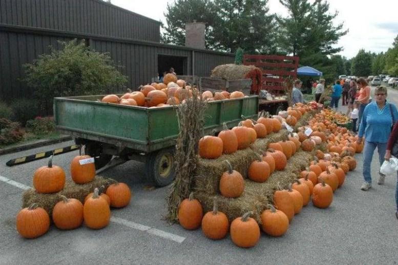 barn-pumpkins