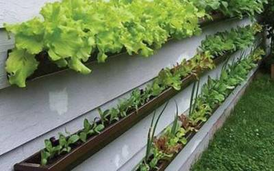 The Vine Garden Plant Outlet Container Gardening