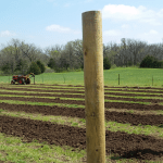 Drilling the holes for the vines and the line posts.