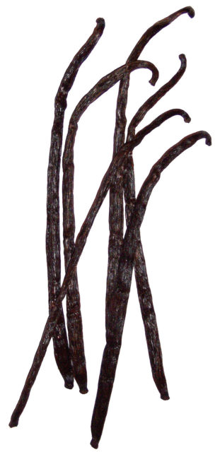 Vanilla fruits, dried By B.navez - Photo : B.navez, CC BY-SA 3.0, https://commons.wikimedia.org/w/index.php?curid=436896