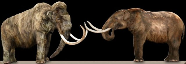 Comparison of woolly mammoth (L) and American mastodon (R). Photo by Dantheman9758 CC BY-SA 3.0