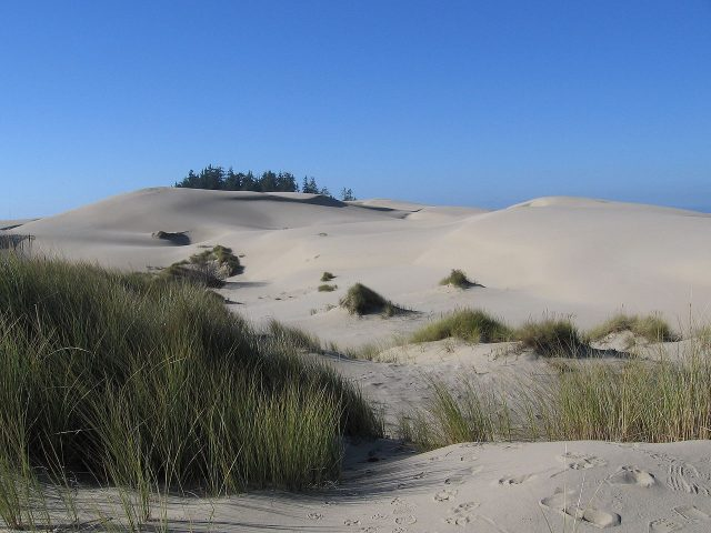 The Oregon Dunes, near Florence, Oregon, served as an inspiration for the Dune saga. Rebecca Kennison – CC BY 2.5