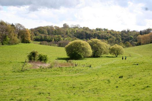 Witcombe Valley 2015