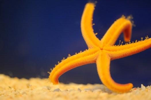 Starfish. Photo credit: Amy Lewis