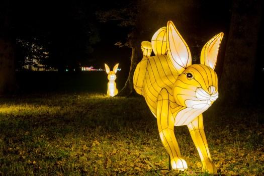beatrix-potter-rabbits-at-longleats-festival-of-light-2016