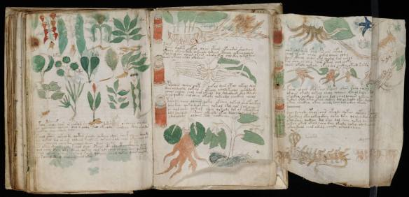 Voynich manuscript undeciphered untranslated unknown language mystery tome grimoire rare medieval codex book Beinecke Library Yale University page 181 folio 102 recto weird plants