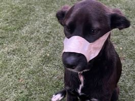 Kei is recovering after being shot in the face by burglars at her family's home in Benoni in South Africa, on Oct. 10. (Boksburg SPCA/Zenger)