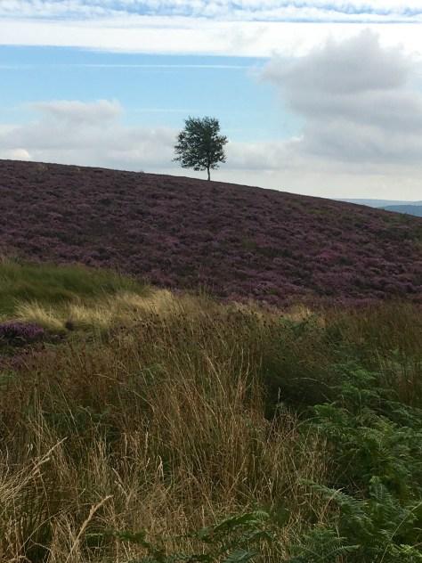 Scarth Moor