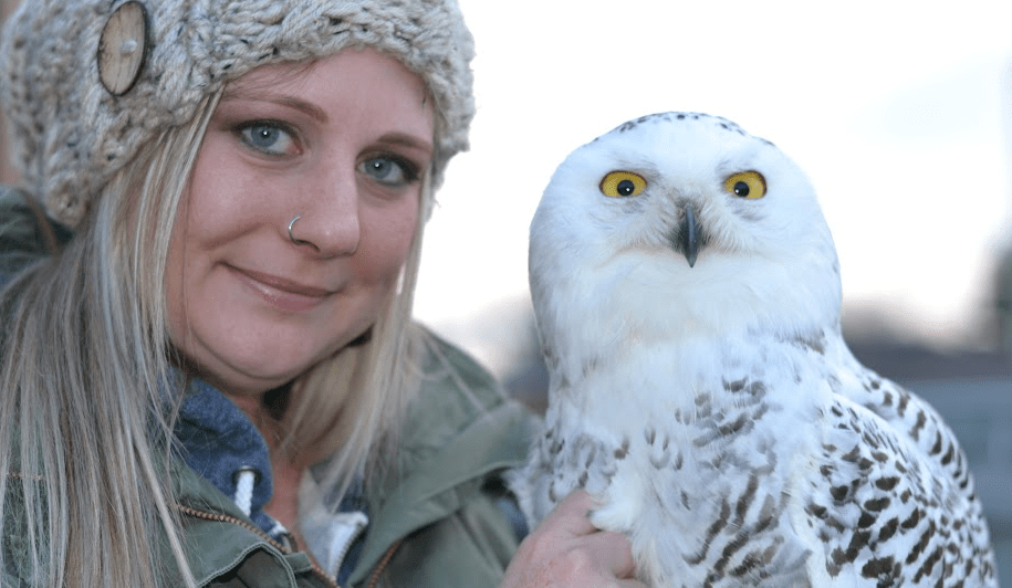 Gimli the Snowy Owl — New Owl in Town is Turning Heads