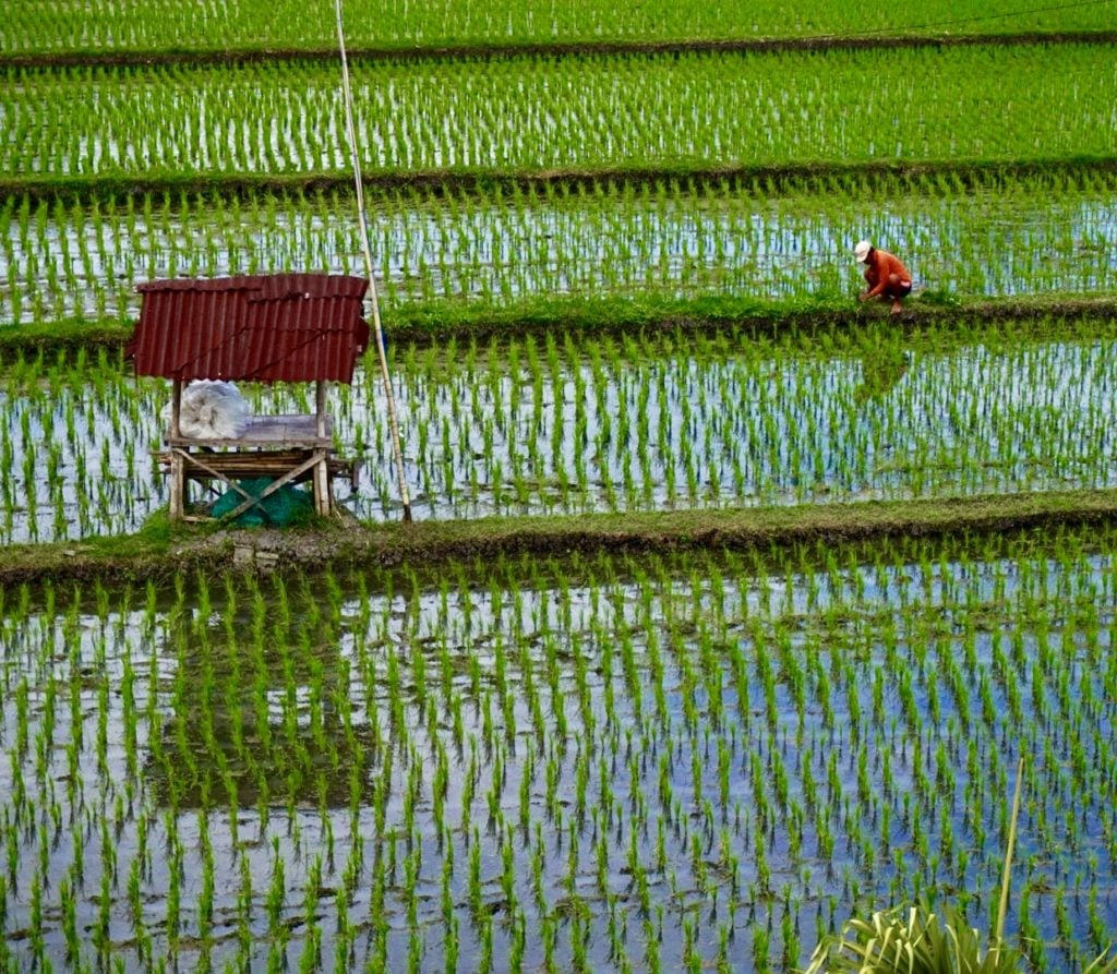Canggu Rice Field •10 Essential Things to Pack for Bali, Indonesia   The Wanderful Me