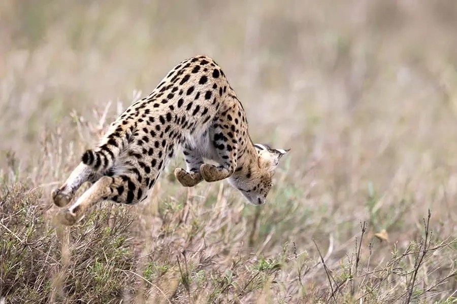 Photographer Interview with Alison Langevad - African Wildlife Photography