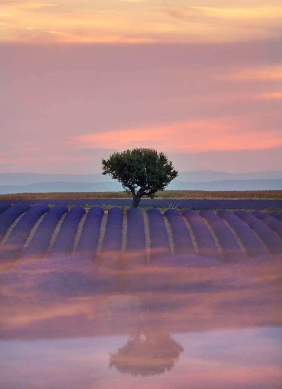 Lavender Fields of Valensole - Places to Photograph in Provence, France