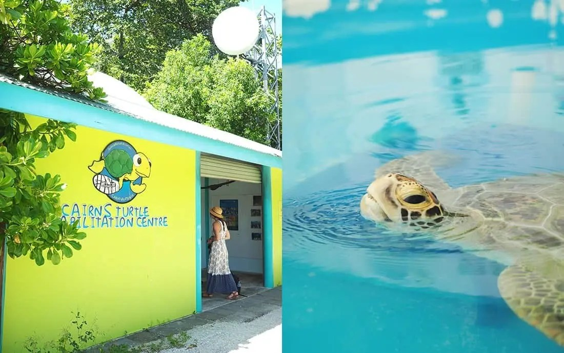 Fitzroy Island Turtle Rehabilitation Centre, Queensland, Australia