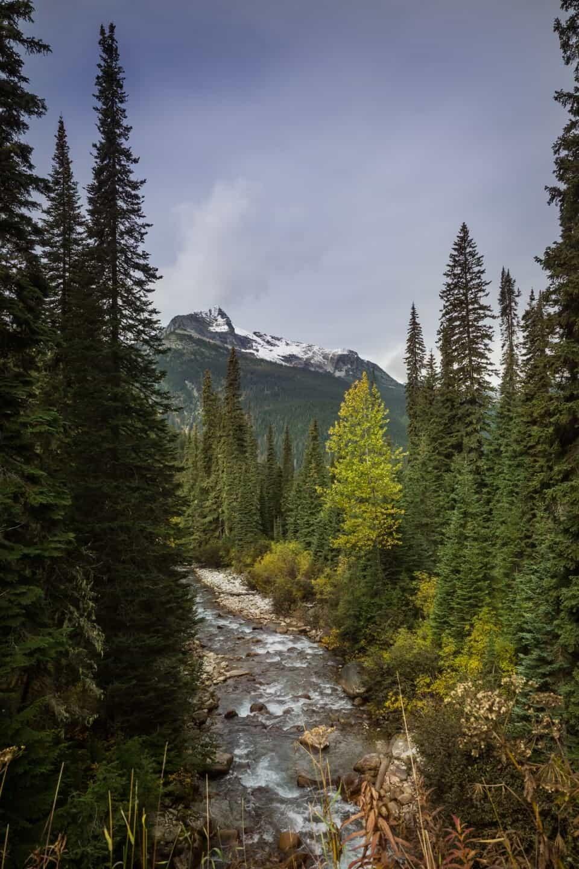 Rogers Pass, Kootenay Rockies