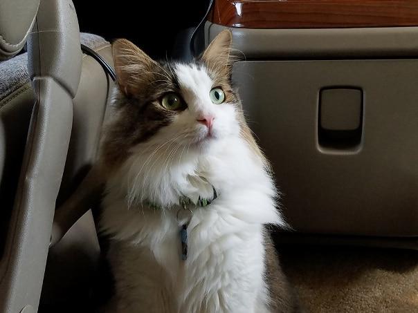 Luna in the RV