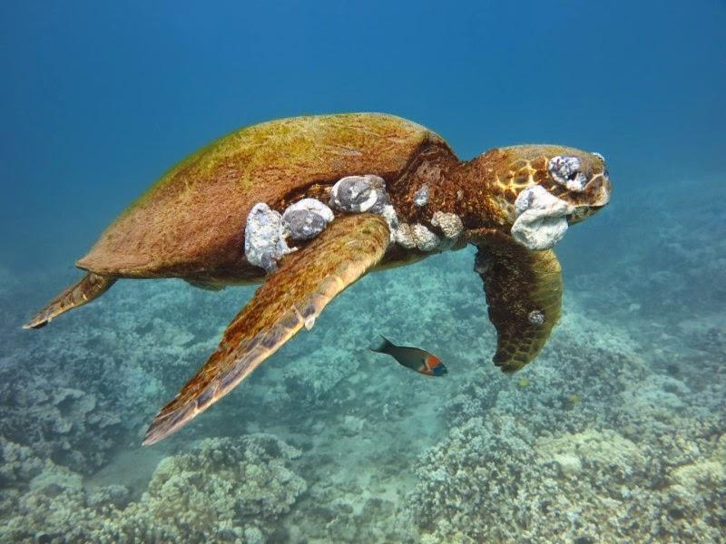 sea-turtle_01