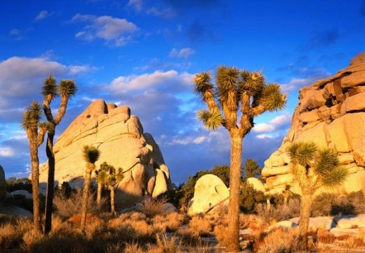 welcome-to-joshua-tree-national-park