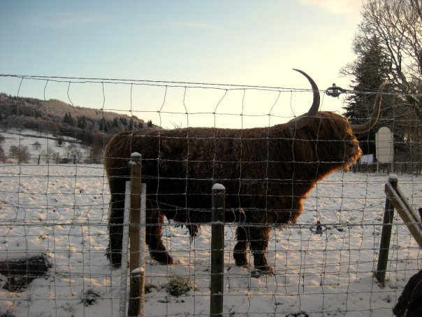 Hamish, Scottish Highlands