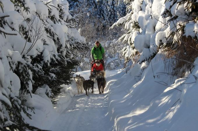 Dog Sledding in Quebec