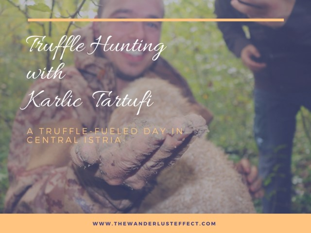 Truffle Hunting with Karlic Tartufi